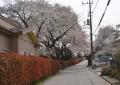 春、来ましたね