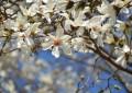 春が見つかりそうです3月25日